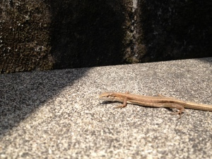 Wildlife_Lizard_02